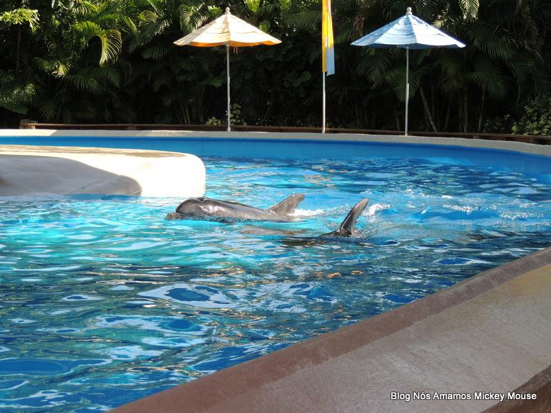 Como o Dolphin Nursery é hoje