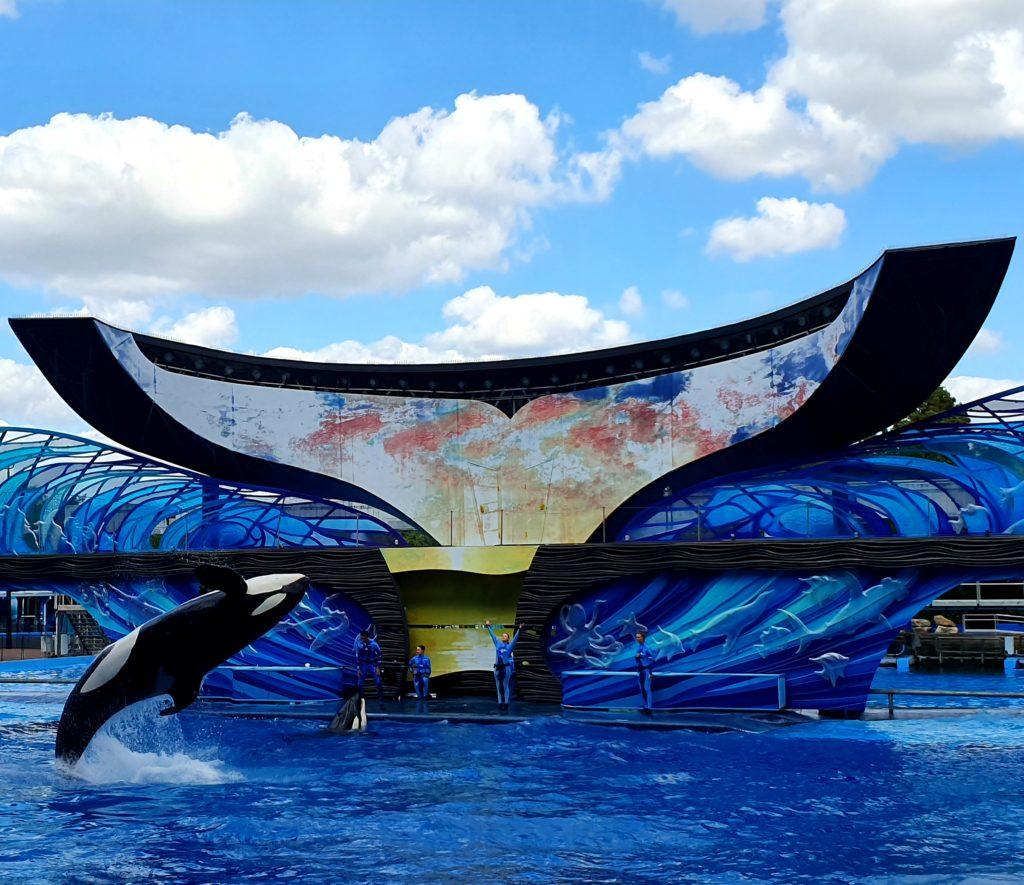 Apresentação de uma das baleias no One Ocean