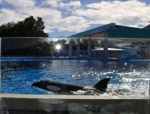 ALMOÇO COM AS BALEIAS NO SEA WORLD: COMO É O DINE WITH ORCAS